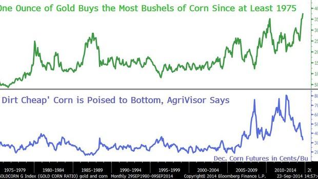 corn_0914